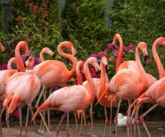 Ga tijdens de herfstvakantie op jungle-expeditie in Nederland