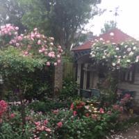 Mijn achtertuin
