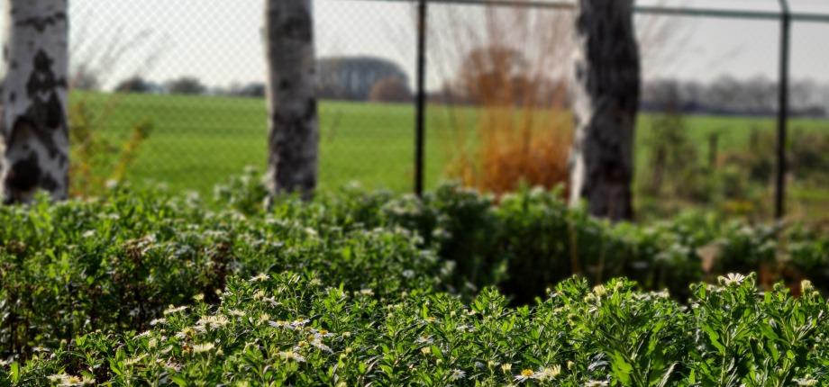 Kloostergaarde in bloei