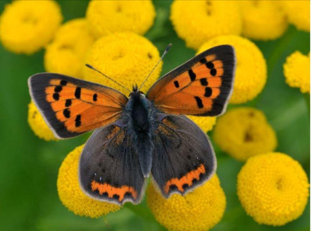Libellen en vlinders