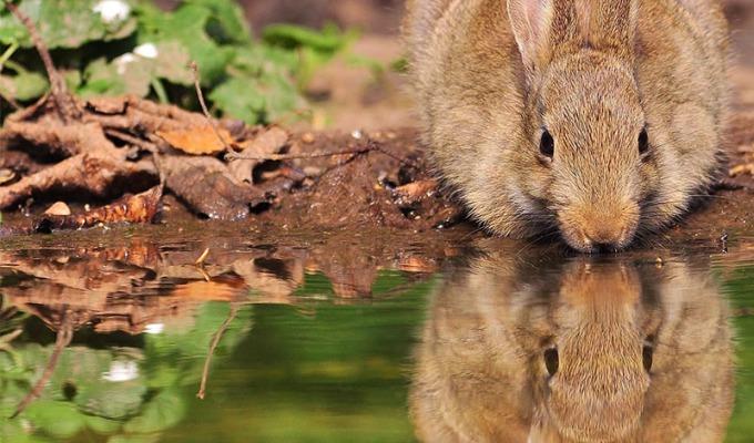 Hazen en konijnen op Rode Lijst