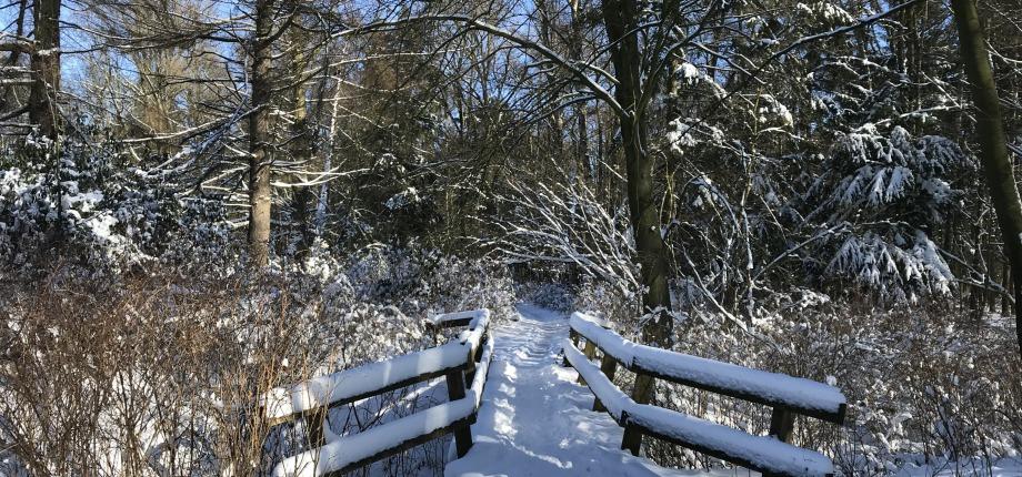 Sneeuwlandsschap
