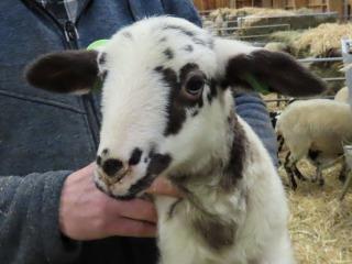 Dagje op pad met de herder