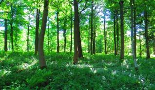 Natuurgebied Achter de Voort, Agelerbroek & Voltherbroek