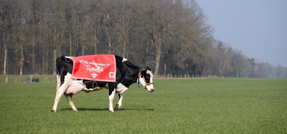 Wi-Fi koe