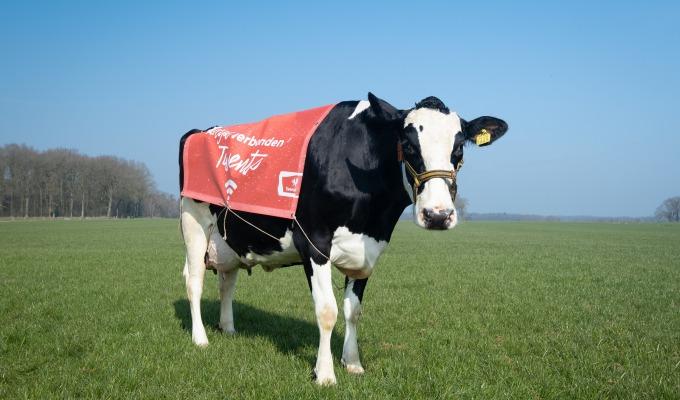 Een kijkje achter de schermen bij... de Twentse Wi-Fi koeien (1 april)