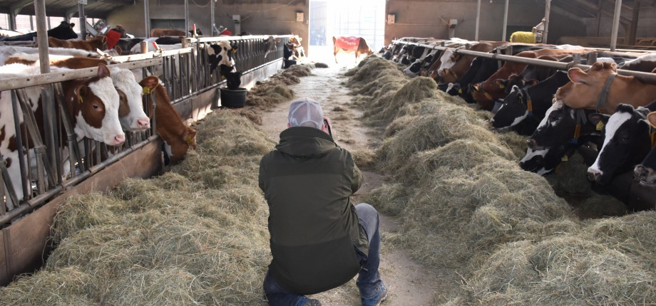 Fotograaf Vincent Croce tussen de koeien