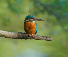 Natuurwandeling tijdens Nationale vogelweek
