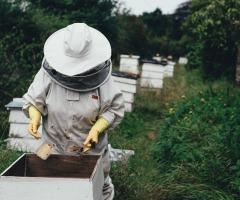 Open bijenstal en Educatieve Kruidentuin