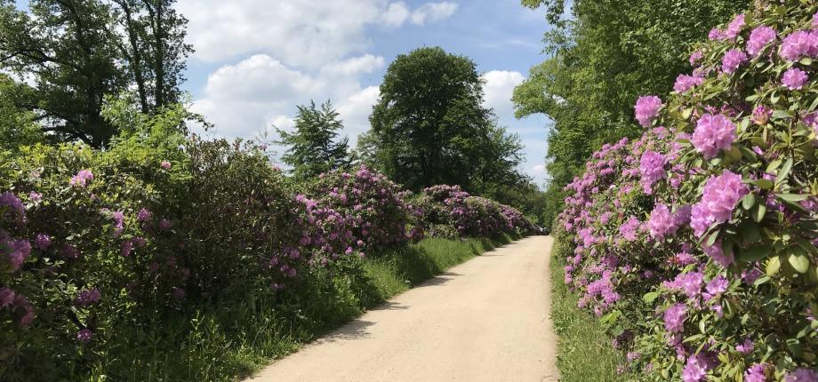 Rhododendronlaan
