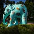 Elephant arrangementen