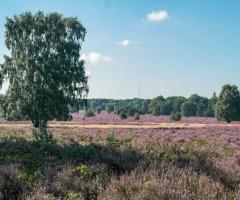 Heidewandeling natuurgebied Springendal