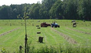 De Kruimelboerderij Koelant