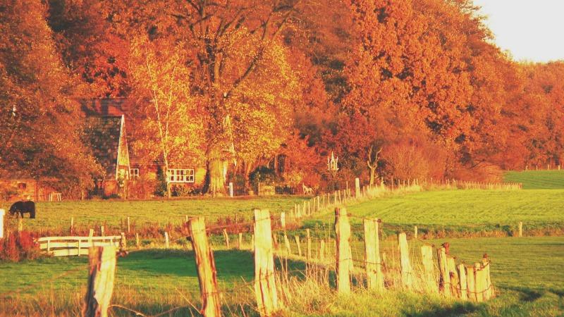 Herbsteinzug in Vasse