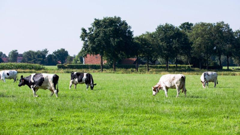 Inlooprondleiding Landgoed Kaamps