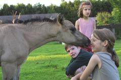 Ponyclub en Landelijke Rijvereniging WWR .