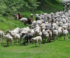 Wandel mee met de kudde naar het veen
