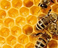 Honing en Bijen