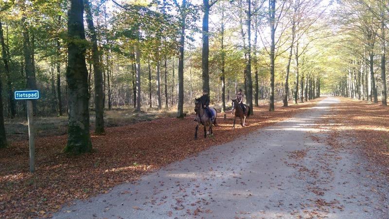 Paardrijnetwerk Twente