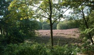 Natuurcamping De Hoogte