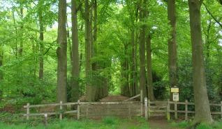 Rondje Grintenbosch (7 km)