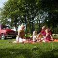 Touren met een Oldtimer en picknickmand