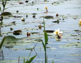 Giethoorn - Waterleven
