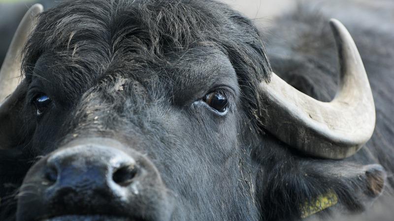 Buffelfarm Kelder