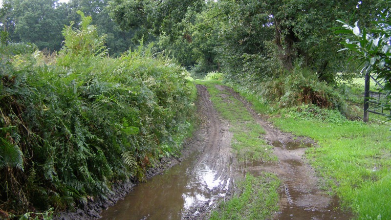 Wandelroute Stroom Esch (Gele Route)