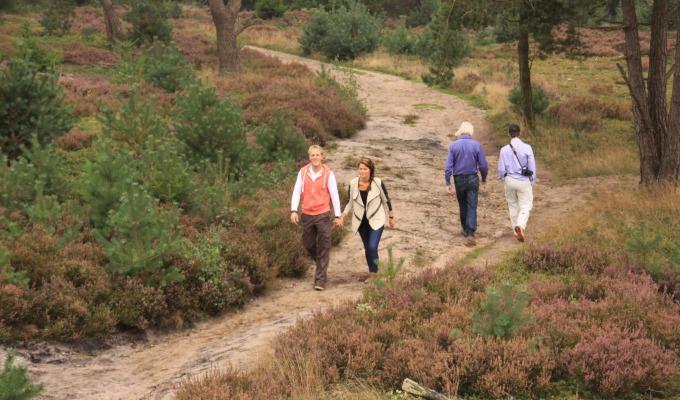 De 4 mooiste wandelroutes in Holten om Twente te ontdekken