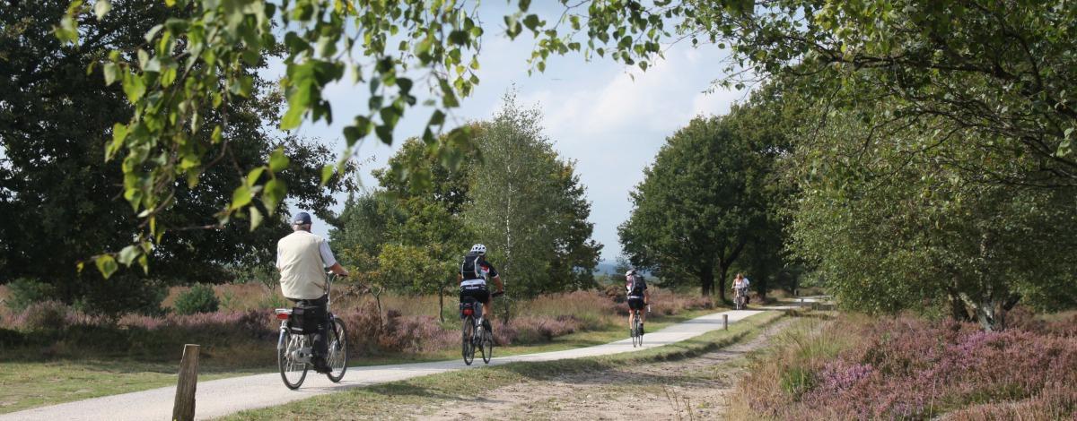 De mooiste fietsroutes in Salland