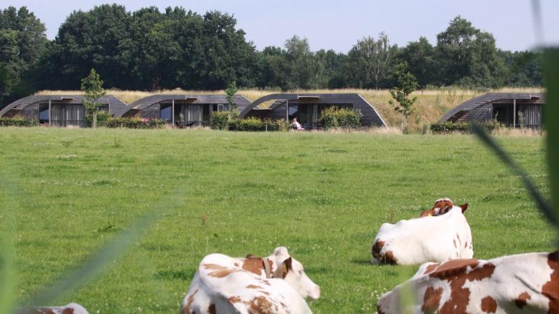 Koe in de Kost