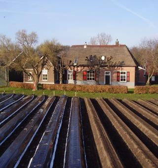 Aspergebedrijf De Boerkamp