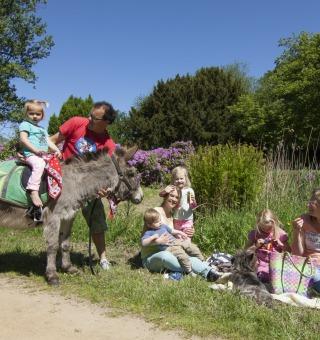 Stichting de Grote ezel