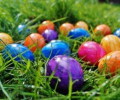 Afgelast | Eieren zoeken bij Museum Buurtspoorweg