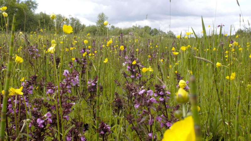 Vaartocht naar bloemrijk hooiland: