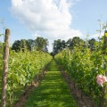 Wijn proeven bij de boer