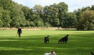 Honden losloopgebied