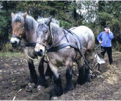 Boer en Land: Akkers bewerken met paard