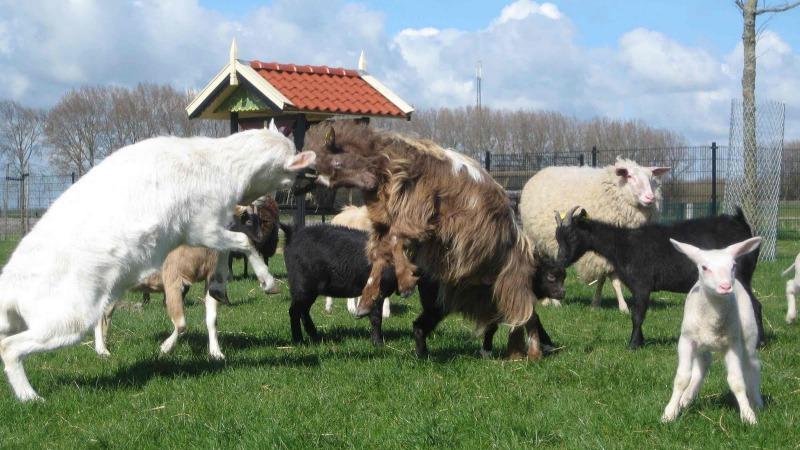 Kinderboerderij 't Wooldrik