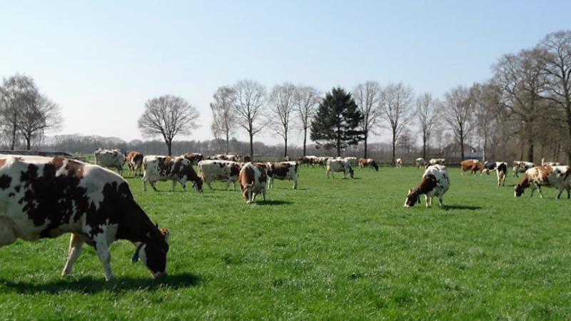 Vakantieboerderij Oosterwijk