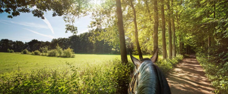 10 manieren om de natuur in Twente te ontdekken