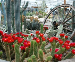 Pinksteren bij Belevingspark CactusOase
