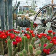Belevingspark CactusOase