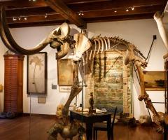 Tijdreis (inclusief fossiel gipsen)
