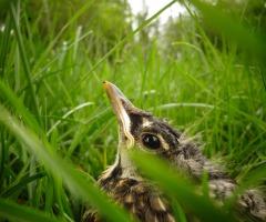 Afgelast: Weidevogel Safari Ottershagen