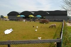 Biologische schapenmelkerij De Vreugdehoeve