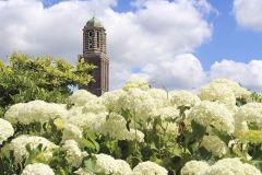 Onze Lieve Vrouwe Basiliek en Peperbustoren