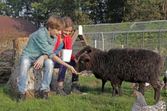 Kinderboerderijen