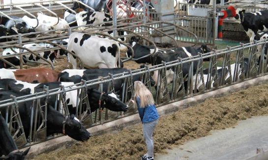 Bezoek melkveebedrijf en boerderijwinkel Zandman in Beerze